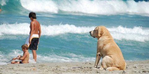 perro-playa